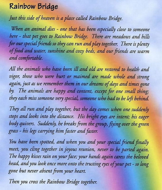end of pet life rainbow bridge poem