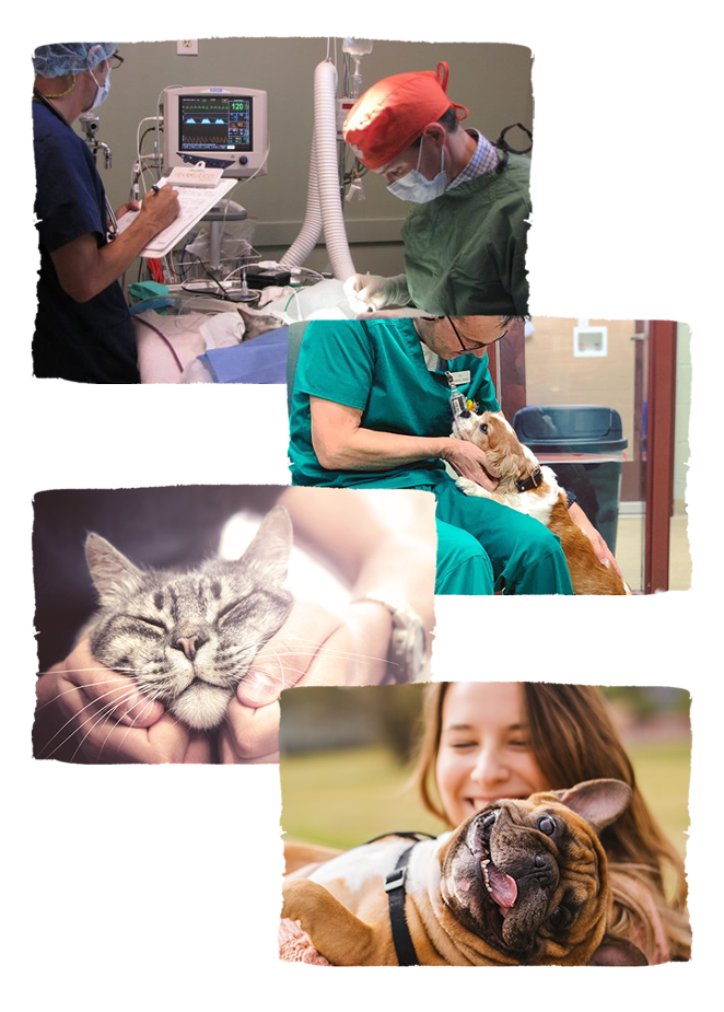 veterinarian at pet surgery