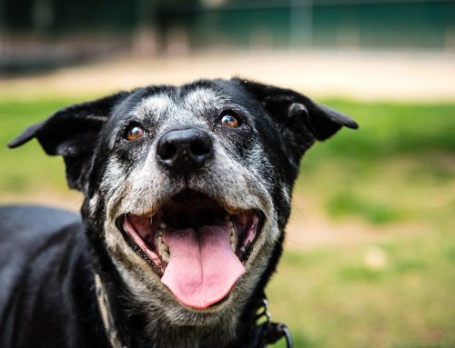 Senior Pet Care 101: Our Top Tips