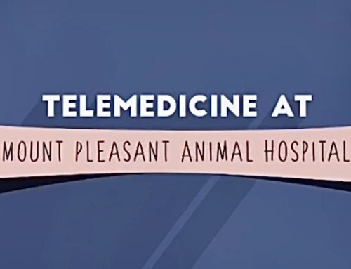 Introducing: Telemedicine